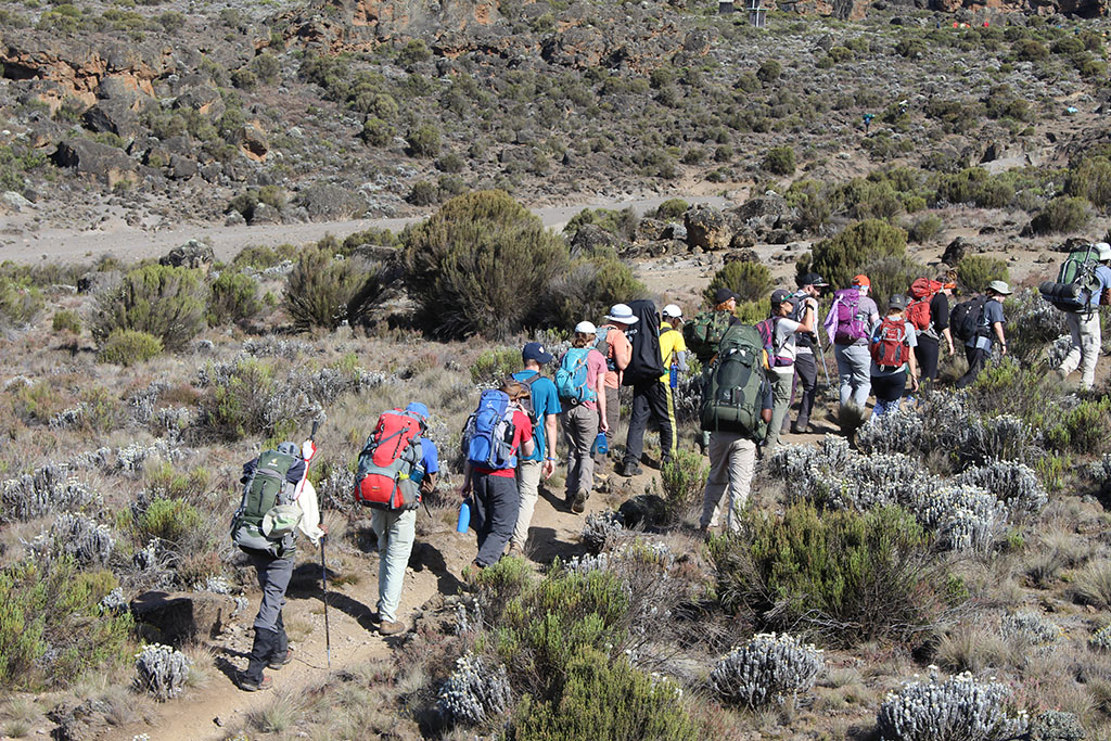 Trekking via Lemosho route 8 days will give enough time for acclimatization