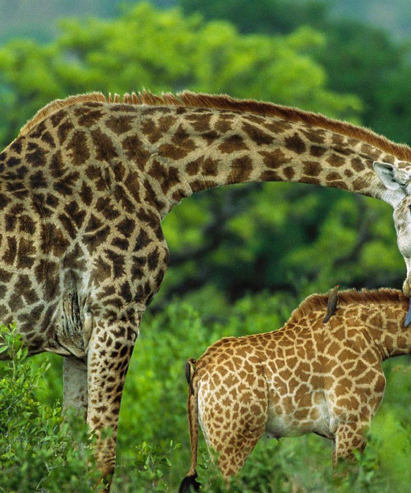 Arusha-national-park-destinations